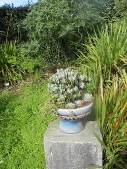 Les plantes grasses & cactus  au  jardin de Roscoff