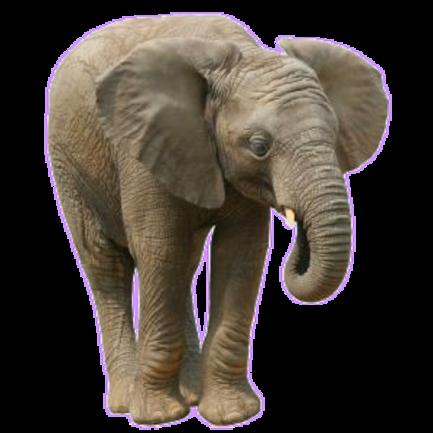 Eléphants Série 5