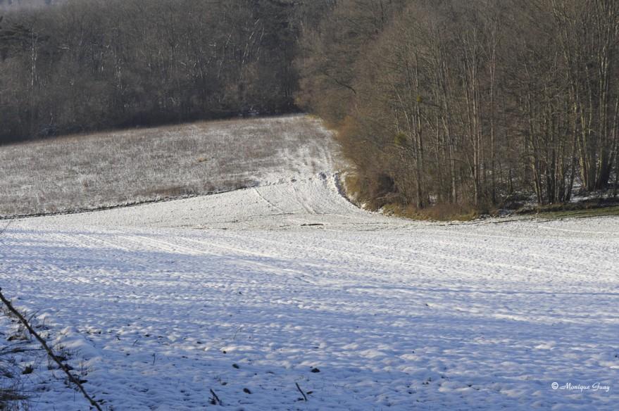 champs-neige-2737.jpg