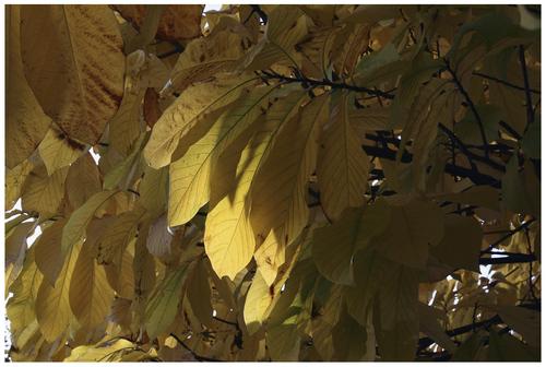 La vie des feuilles mortes...
