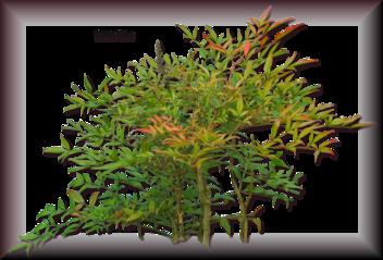 Tubes d'arbre 2964