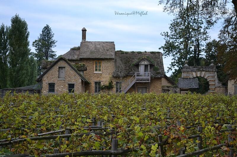 Versailles : Le Domaine de Marie-Antoinette : Les vignes