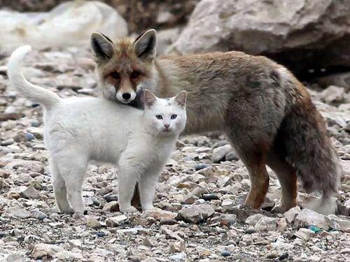 merveilleuse amitiée