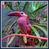 20140430-01-parc des oiseaux-15