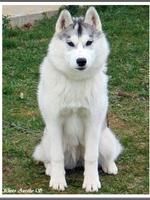 Ourka (5,5 mois)