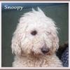 Snoopy B2