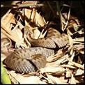 Galerie  Autres bestioles :  Amphibiens. Reptiles.