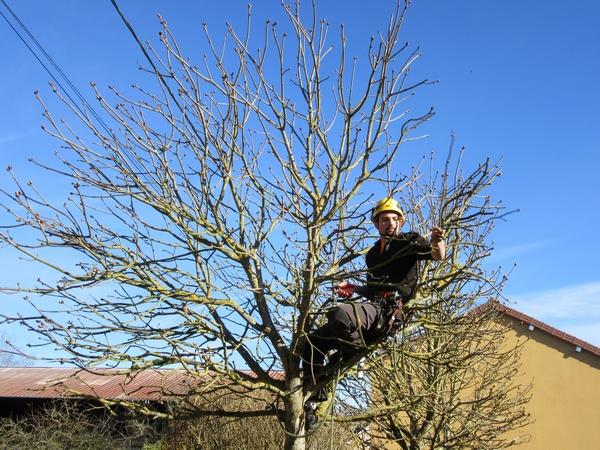 Anthony Colas, arboriste, grimpeur, élagueur à Origny sur Seine a montré tout son savoir-faire, lors de l'inauguration de la nouvelle fromagerie de Marronniers