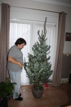 Sapin de Noël....et futur nouvel arbre dans notre jardin