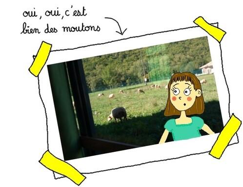 photos-moutons.jpg