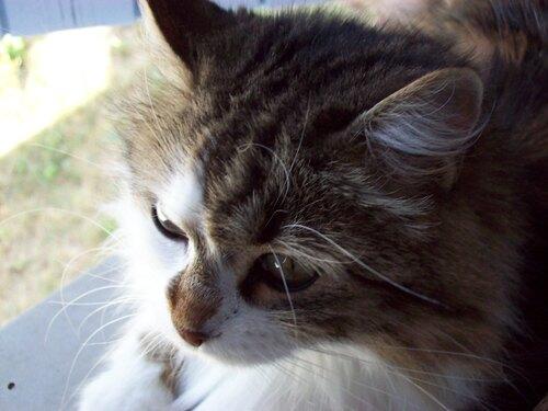 Miaou du 1er dimanche d'automne ...