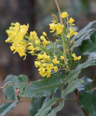Les jaunes de mon printemps