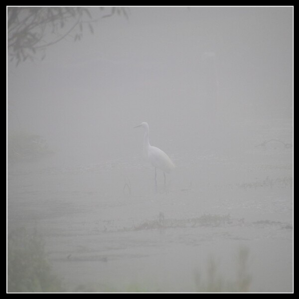 Que du brouillard