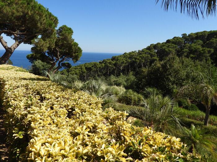 Calella - suite - le jardin