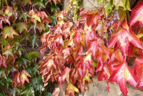 A feuilles ouvertes :