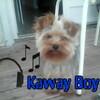 Kaway Boy