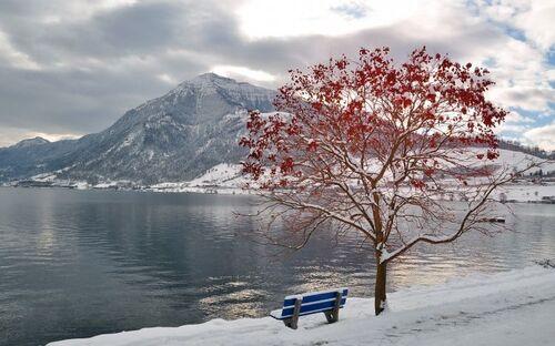 Photo de banc sous un arbre