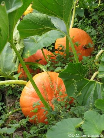 Les jardins de Findhorn