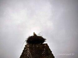 une cigogne sur son nid