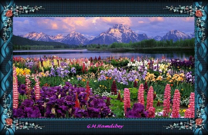 cadre beauté nature