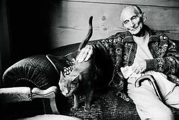 Le roi des chats :