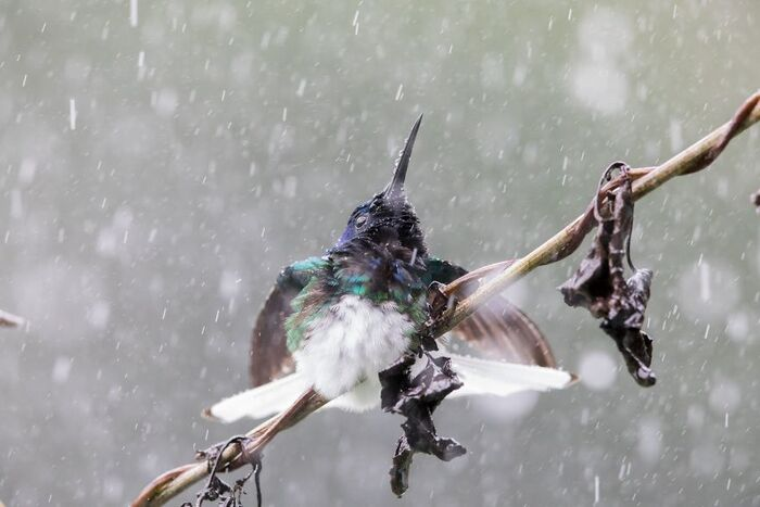 photographe de la nature à Tokyo..........par Kunito Imai..