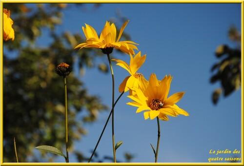 Fleurs jaunes, oranges