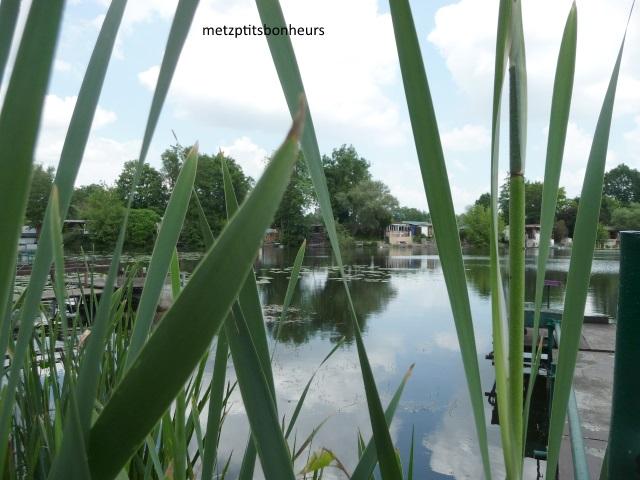Autour de l'étang...