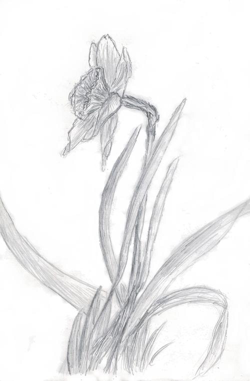 Des fleurs, des fleurs, et toujours des fleurs