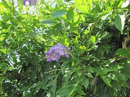 fleurs-5335.JPG