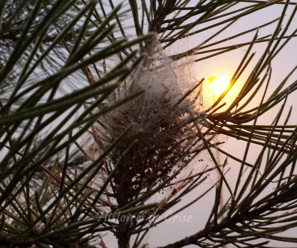 photographie d'hiver