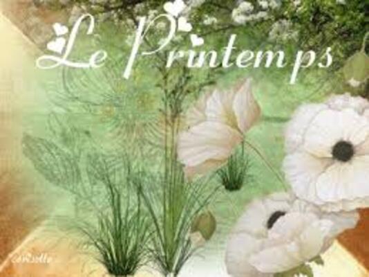 """** Les """"ARMERIAS maritimes"""" et LIS de MER & Autres Fleurs du Littoral.*BRETON**"""