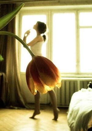 Vendredi haïku, senryû, tulipe...