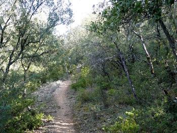 Début du parcours en sous-bois