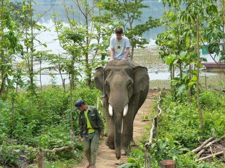 Le centre des éléphants.