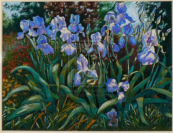 Jardin_d__iris_7_by_Martine_m_richard.jpg