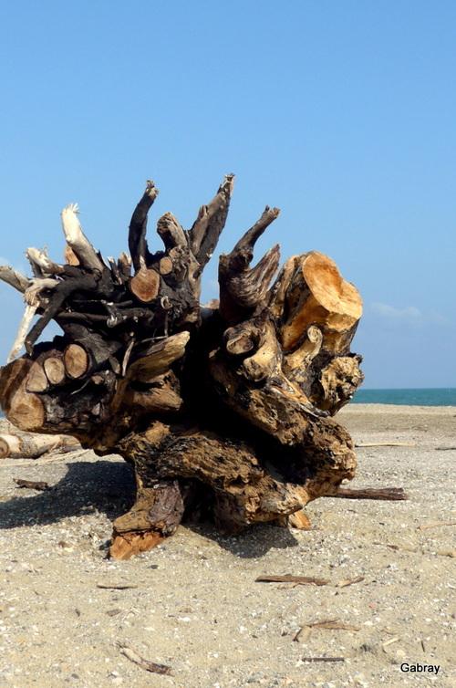 Le Barcarès : plage en mars !