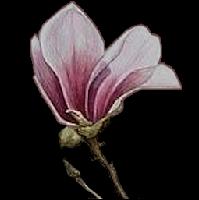 *** Floral Bowl ***