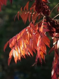 Lumière d'automne .....