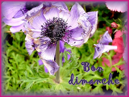 fleurs-vacances--11-.jpg