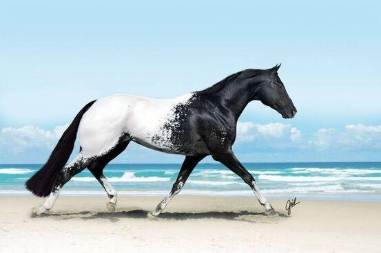 15 chevaux les plus magnifiques au monde