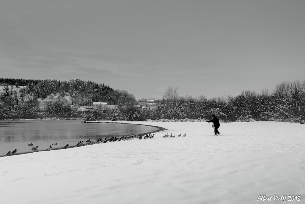 Le monsieur aux canards