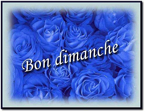 roses-bleues.jpg