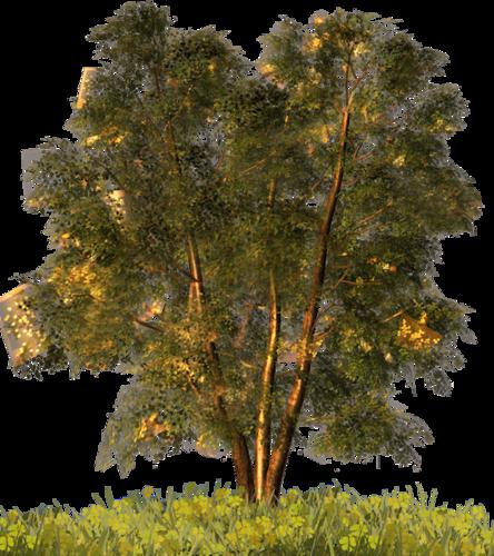 Arbres et végétation