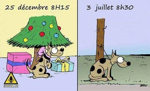 Un animal n'est pas un cadeau !