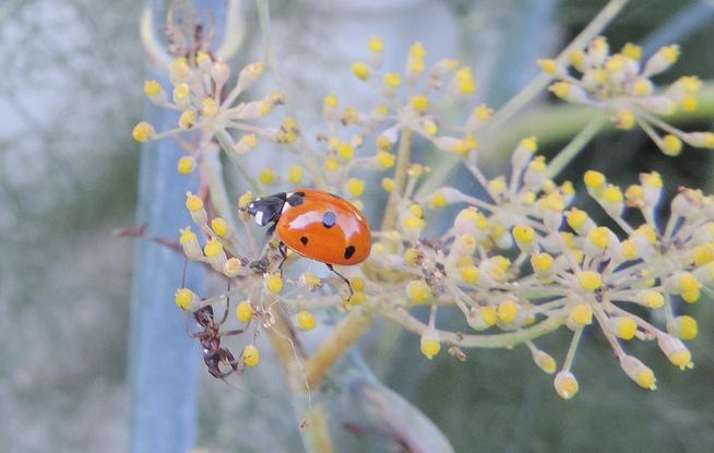 Petites bêtes du jardin