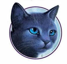 Etoile Bleu images