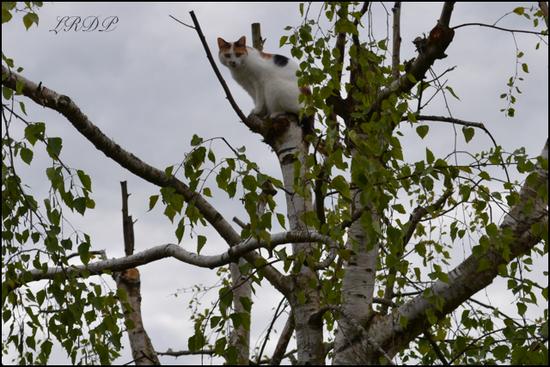 Chat ou Oiseau ?