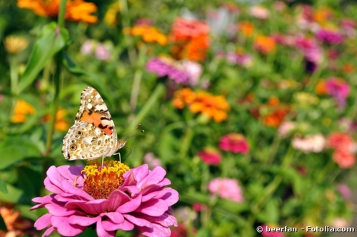 Comment inviter les papillons dans son jardin ?
