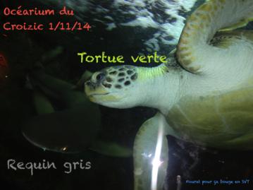 Carte postale de l'océarium du Croizic de la part de Fourat